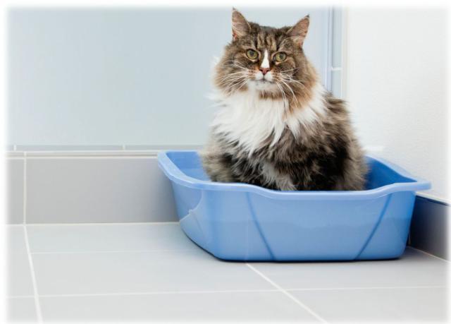 kedim-eve-tuvaletini-yapiyor-patiliyo-2