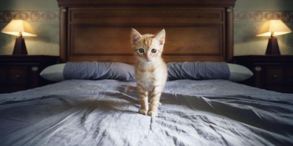 kedim-eve-tuvaletini-yapiyor-patiliyo-3
