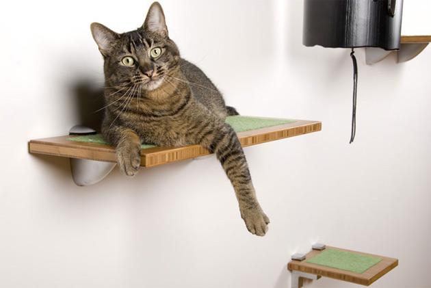 kedim-eve-tuvaletini-yapiyor-patiliyo-4