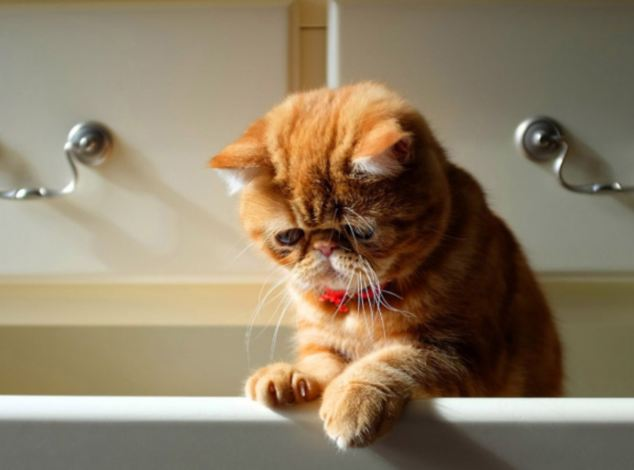 """THE SADDEST, MOST ADORBALE CATS EVER! THIS COLLECTION OF MISERABLE MOGGIES WILL TUG AT THE HEART STRINGS. **MANDATORY CREDIT SAD AND USELESS** ©Sad and Useless *** Local Caption *** ALL MATERIAL MUST BE CREDITED """"SAD AND USELESS"""". 100% SURCHARGE IF NOT CREDITED"""