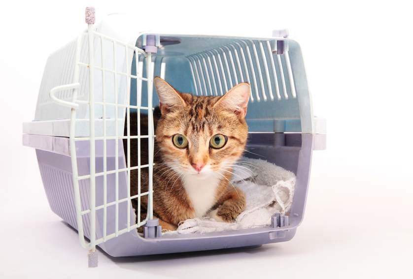 Kedi Taşıma Çantası Alırken Bilmeniz Gereken 11 Şey
