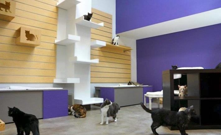 kediyle-birlikte-ev-tasima-patiliyo-10