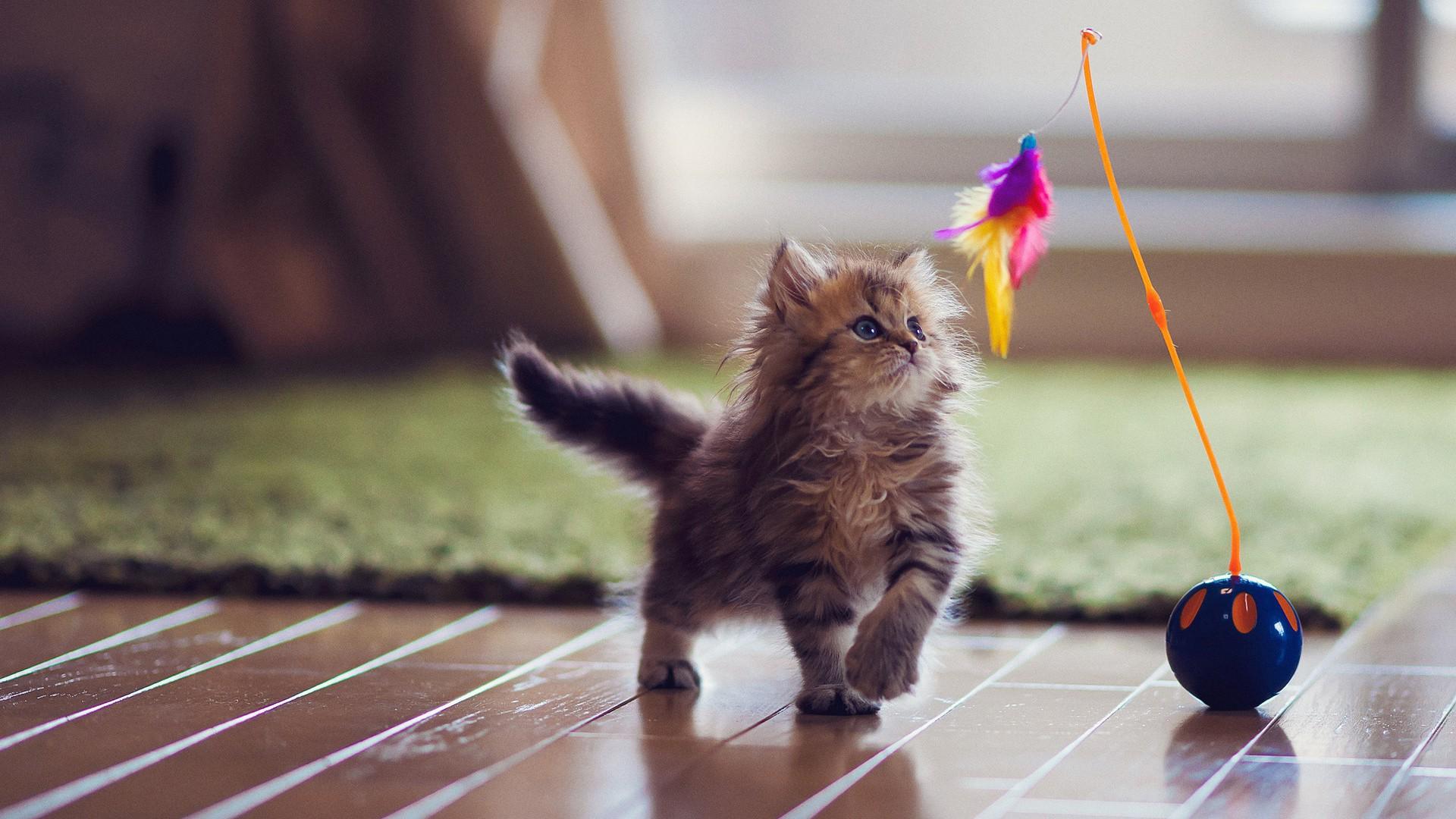 kediyle-birlikte-ev-tasima-patiliyo-3