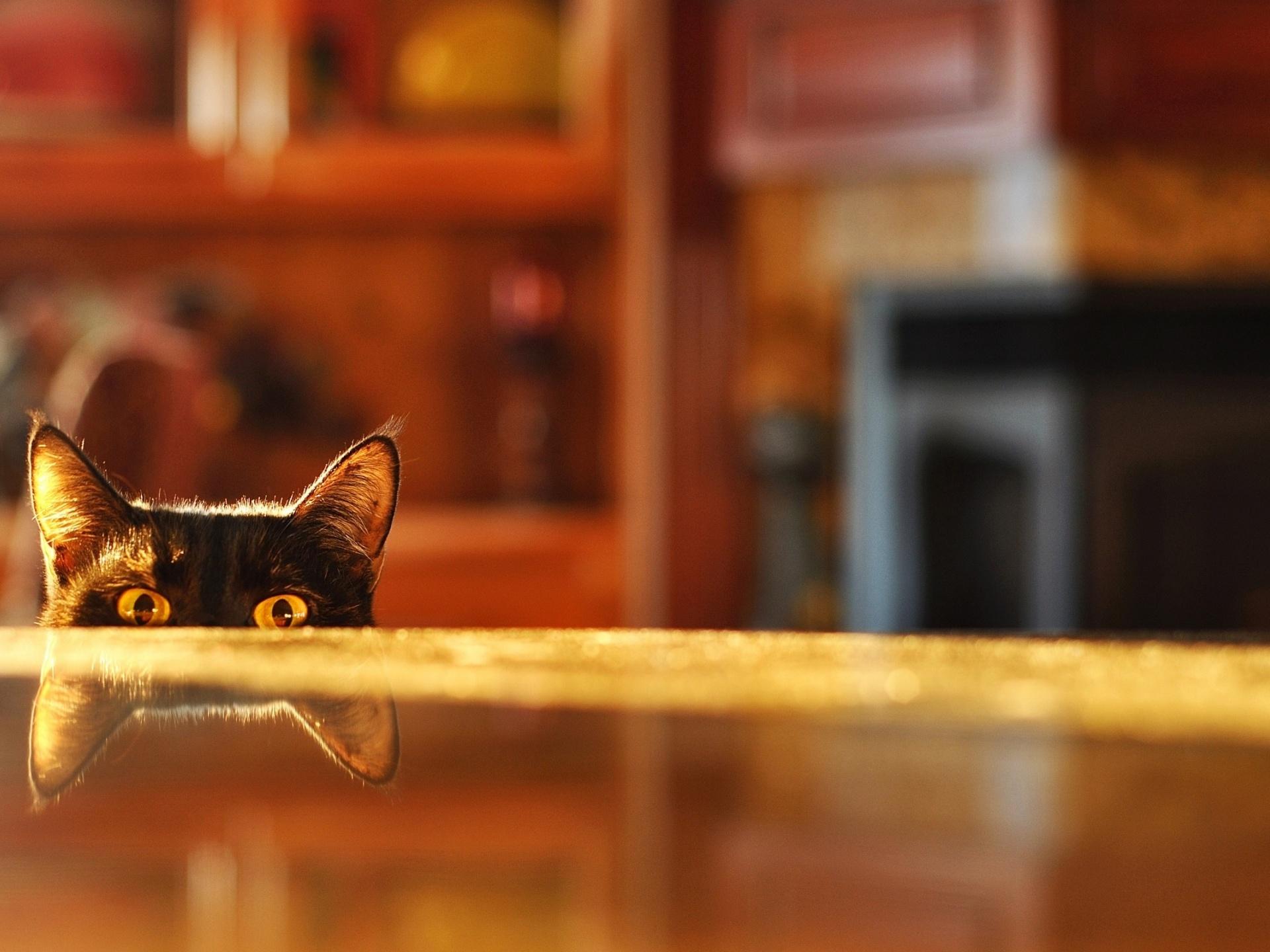 kediyle-birlikte-ev-tasima-patiliyo-5