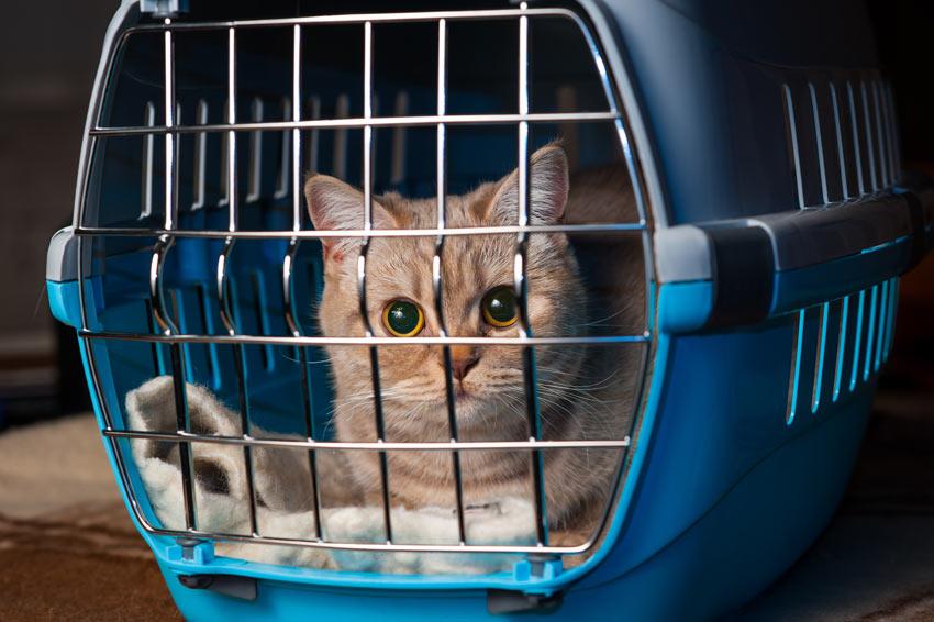 kediyle-birlikte-ev-tasima-patiliyo-7