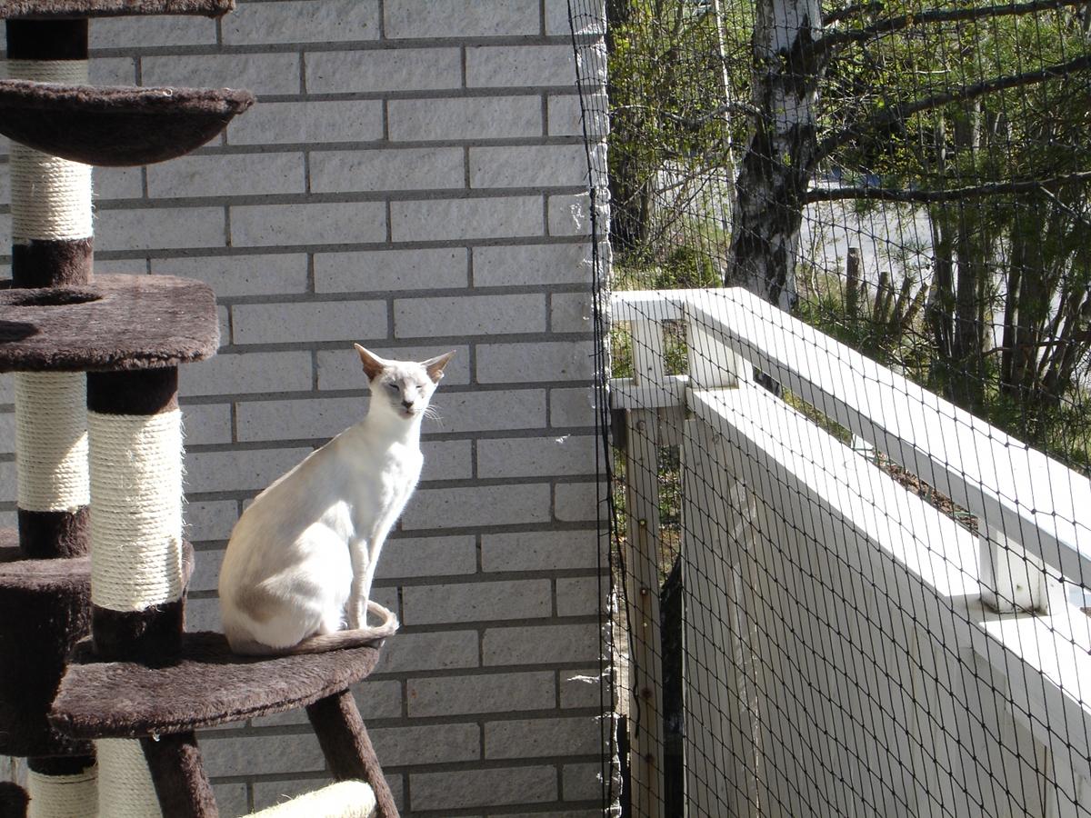 kediyle-birlikte-ev-tasima-patiliyo-8