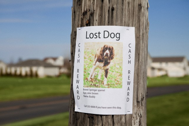 """""""Lost dog"""" post --- Image by © Vstock LLC/Tetra Images/Corbis"""