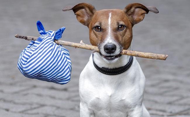 Köpeğiniz Kaybolduğunda Paniğe Kapılmadan Yapmanız Gereken 8 Şey