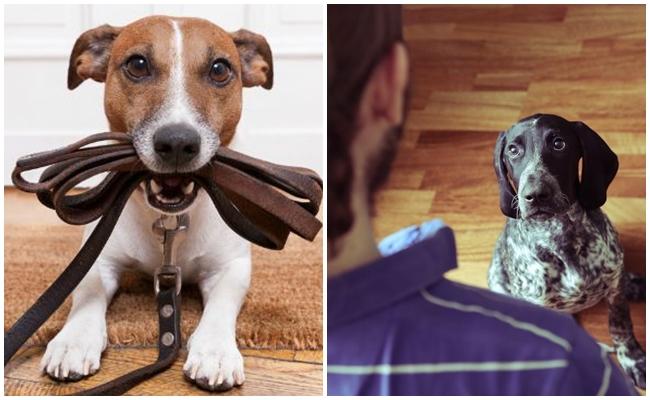Köpeğinize Asla Yapmamanız Gereken 7 Önemli Davranış