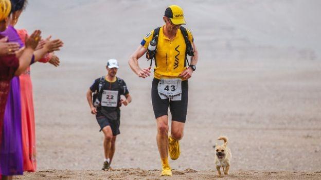 maraton kopek