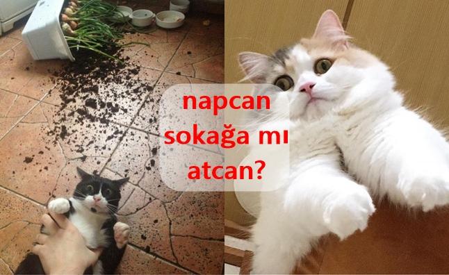 """Napcan Sokağa mı Atcan?"" Fenomenini Taçlandıran 16 Sevimli Hayvan"