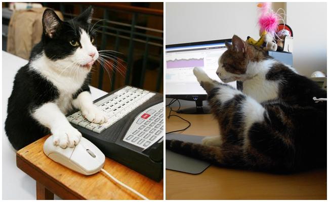 Sadece Evde Değil Ofiste De Kedi Beslemenin Çok iyi Bir Fikir Olduğunun 11 Kanıtı