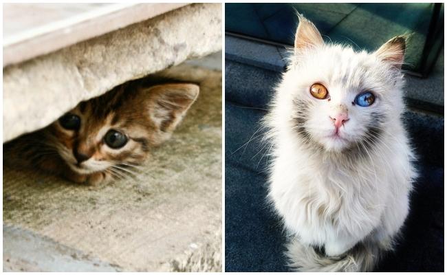 Sadece Kedisini Sokaktan Sahiplenenlerin Gönülden Bileceği 14 Duygu