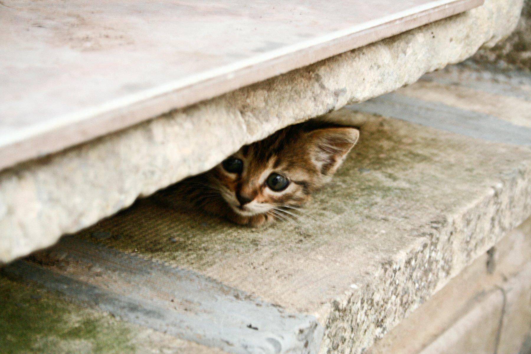 sokaktan kedi sahiplenmek