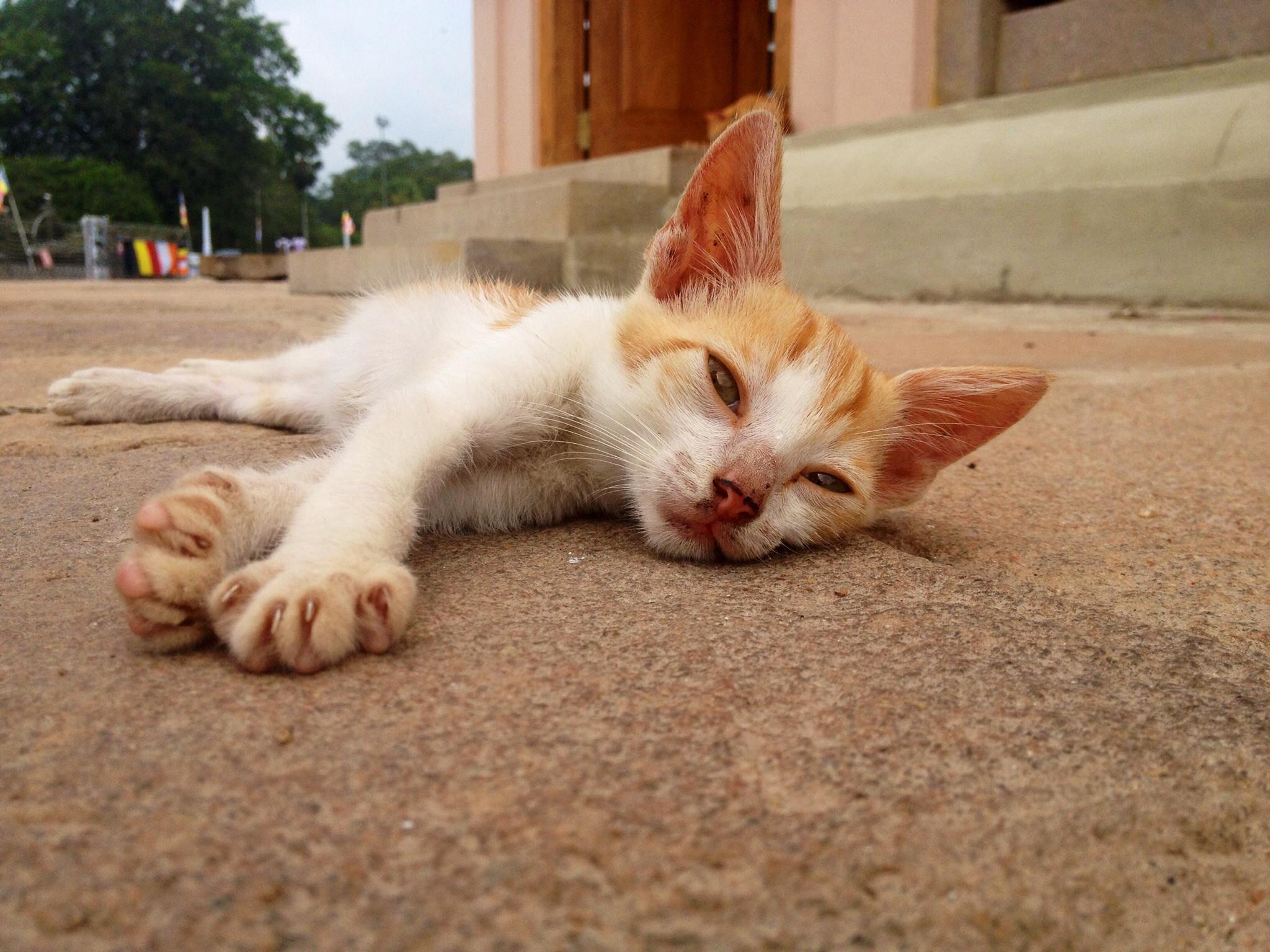 sokaktan-kedi-sahiplenmek-patiliyo-11