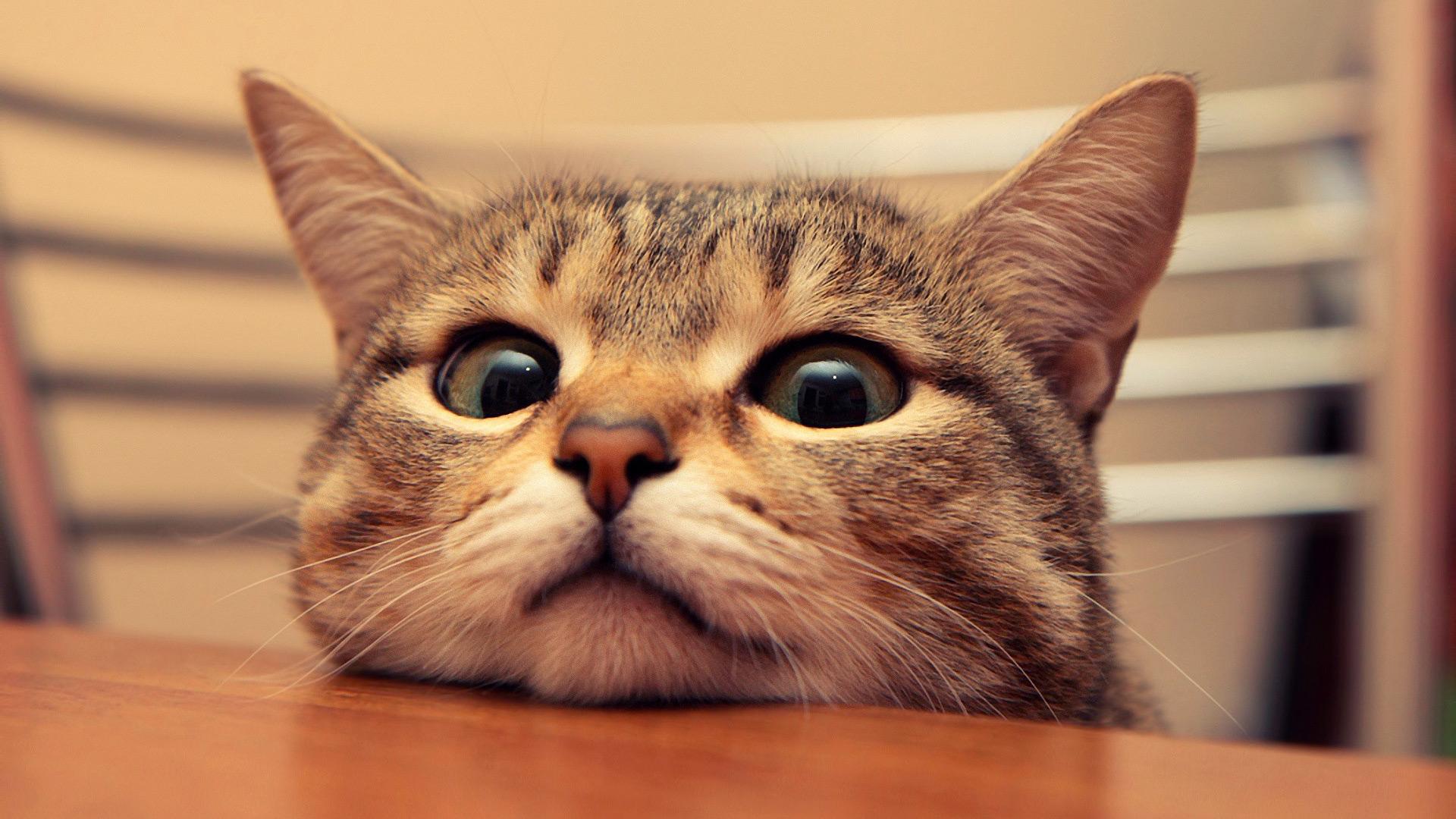 sokaktan-kedi-sahiplenmek-patiliyo-13