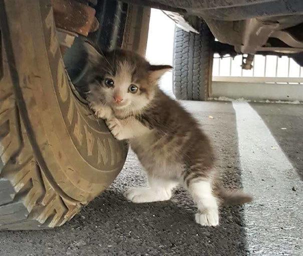 sokaktan-kedi-sahiplenmek-patiliyo-2