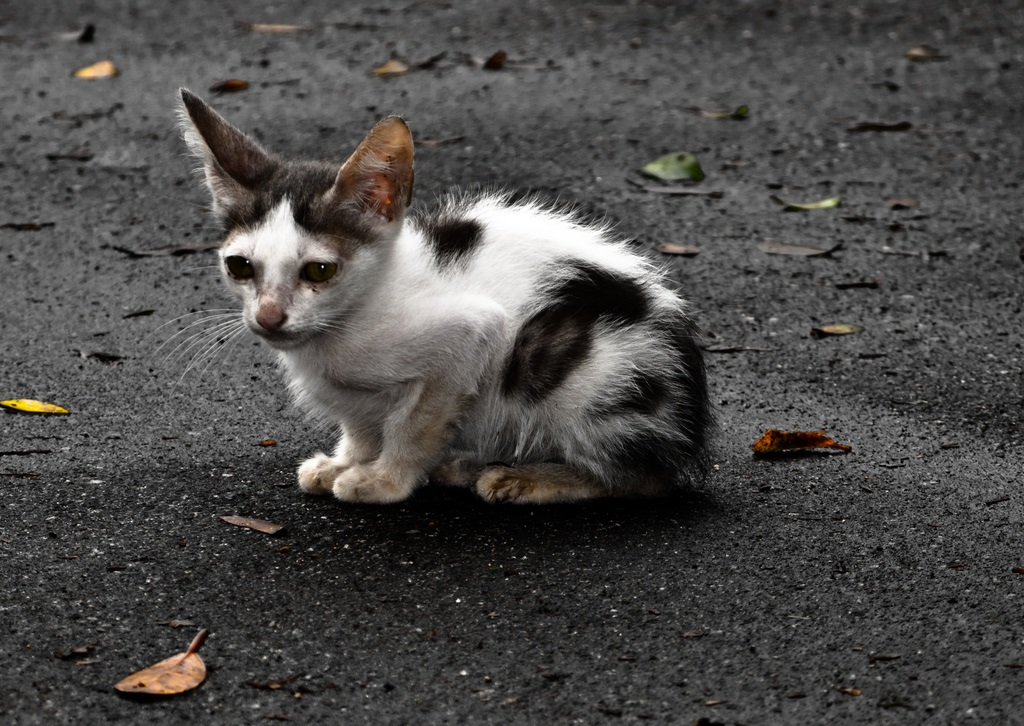 sokaktan-kedi-sahiplenmek-patiliyo-3