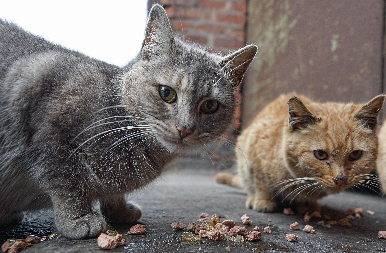 sokaktan-kedi-sahiplenmek-patiliyo-5