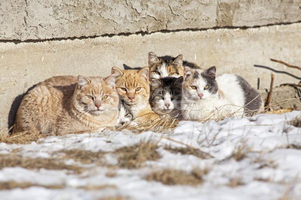 sokaktan-kedi-sahiplenmek-patiliyo-6
