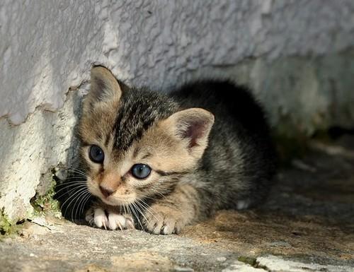 sokaktan-kedi-sahiplenmek-patiliyo-7