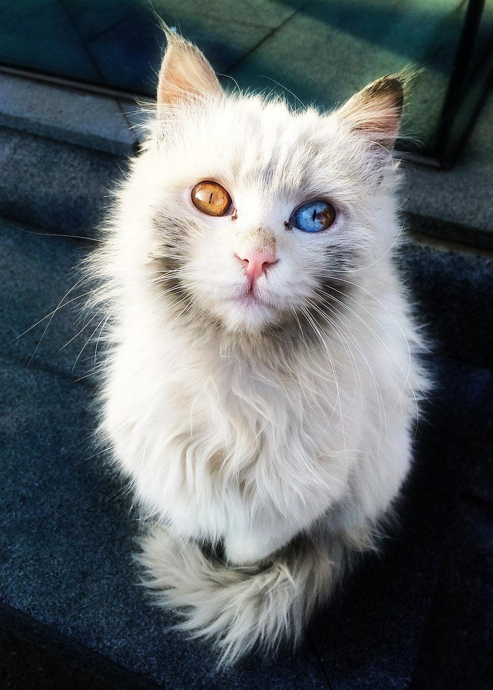 sokaktan-kedi-sahiplenmek-patiliyo-8