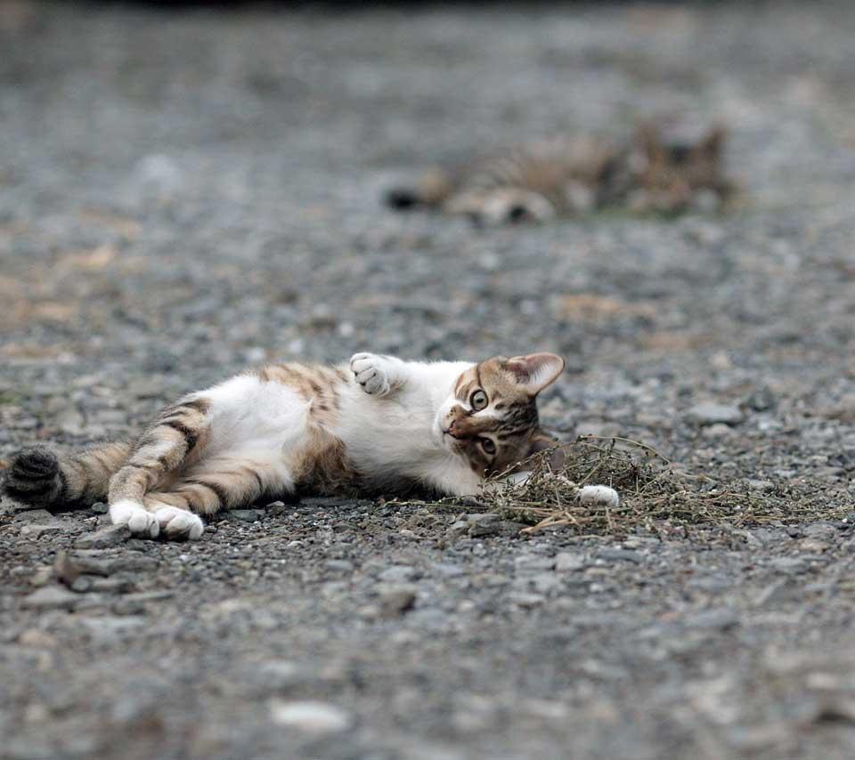 sokaktan-kedi-sahiplenmek-patiliyo-9