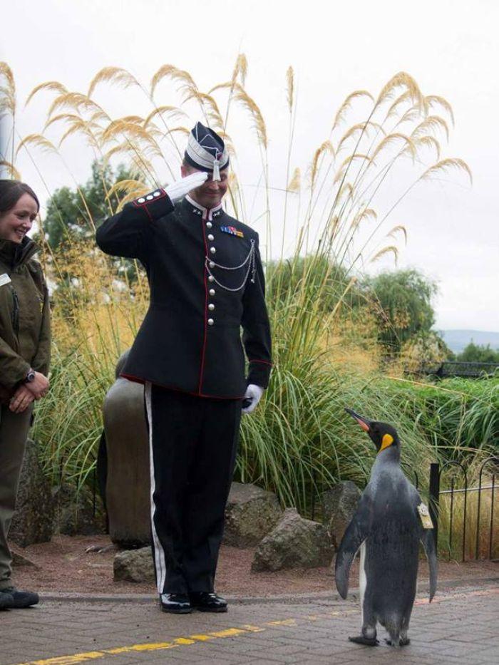 tuggeneral-penguen-patiliyo-4