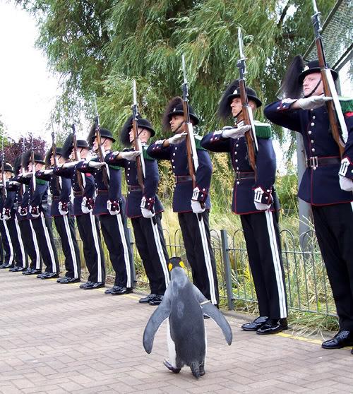 tuggeneral-penguen-patiliyo-5