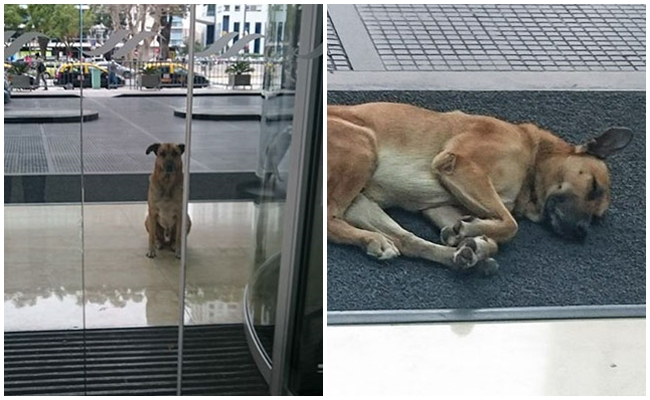 Onu Seven Alman Hostesi Aylarca Arjantin'de Otel Önünde Bekleyen Vefalı Köpek