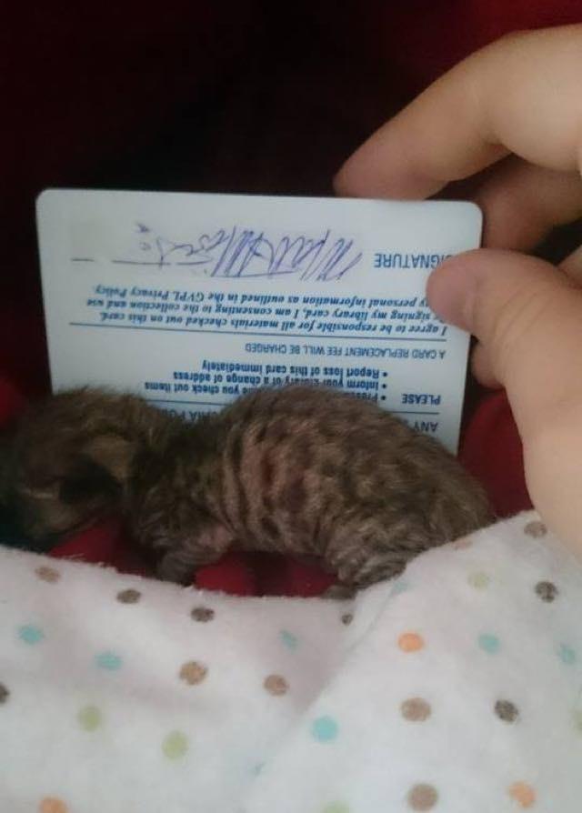 yeni-dogmus-yavru-kedi-patiliyo-3