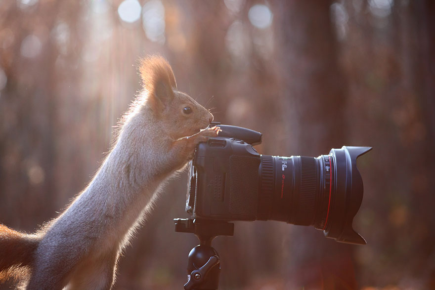 sincap-fotograflari-patiliyo-5