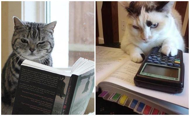 Kedilerin Ne Kadar Akıllı Olduğunu Gösteren 7 Miyavsal Olay