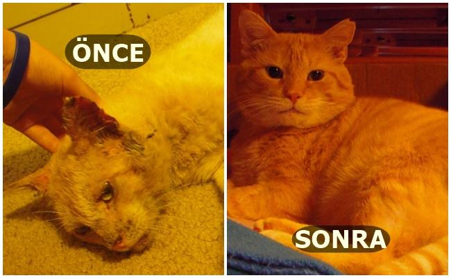 Aşkın Kedilere Neler Yapabileceğinin Kanıtı 17 Öncesi&Sonrası Fotoğraf