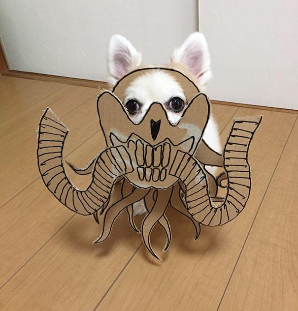 chihuahua-cinsi-kopek-patiliyo-7