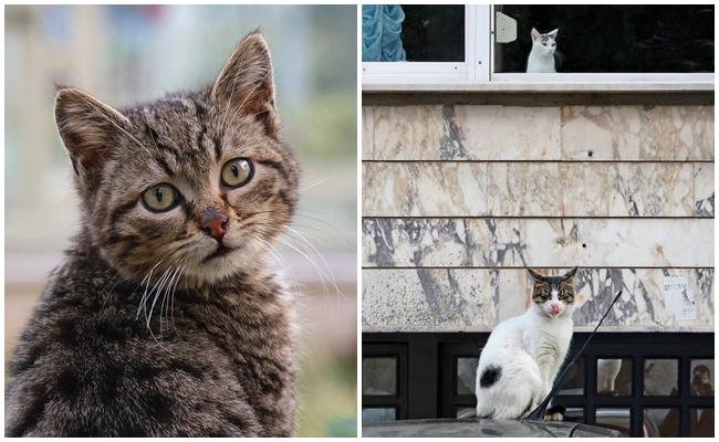 İstanbul'a Yerleşen Fransız Fotoğrafçının Objektifinden Cihangir'in Sokak Kedileri