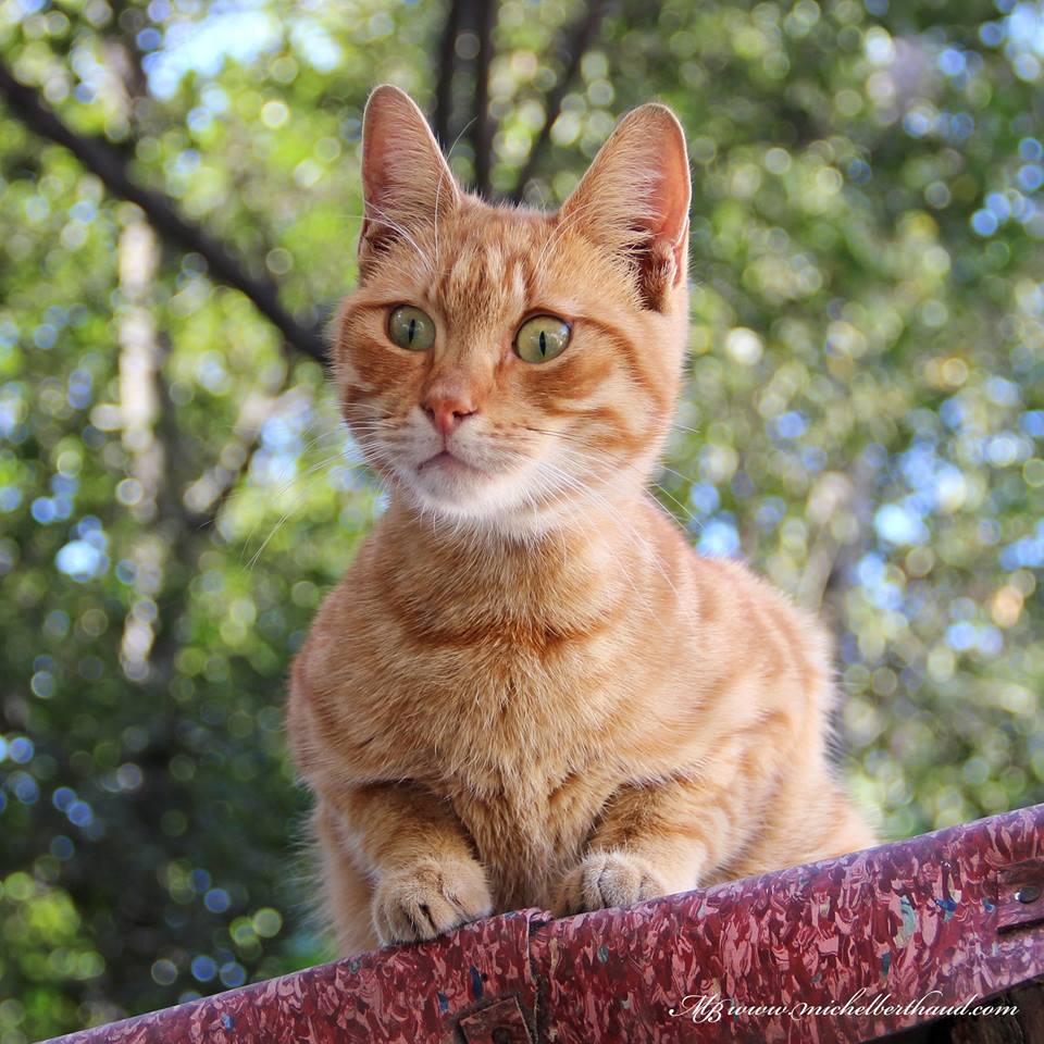 cihangir-kedileri-patiliyo-18