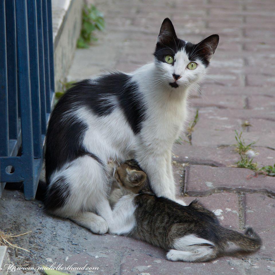 cihangir-kedileri-patiliyo-19