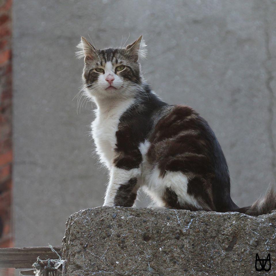cihangir-kedileri-patiliyo-2