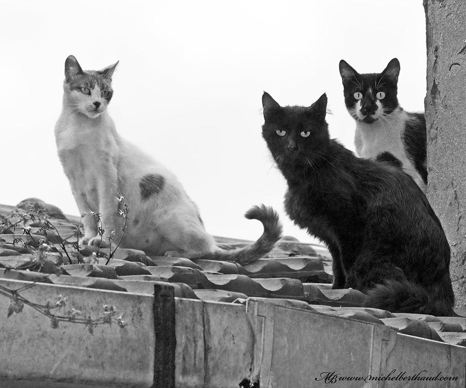 cihangir-kedileri-patiliyo-20