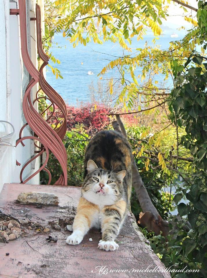 cihangir-kedileri-patiliyo-23