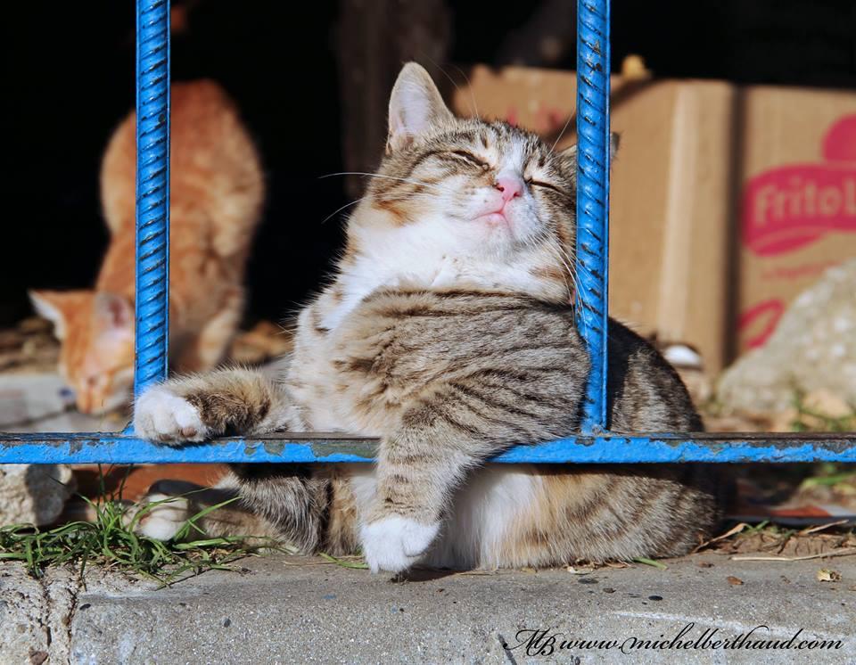 cihangir-kedileri-patiliyo-25