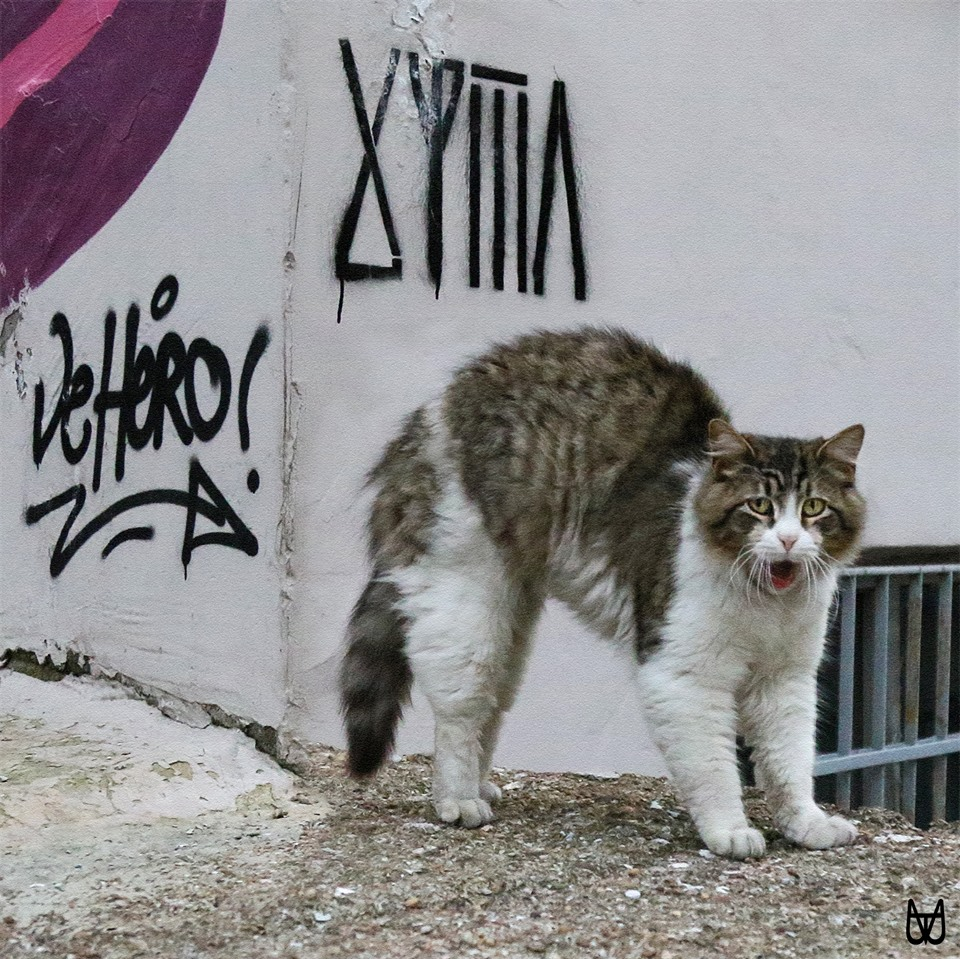 cihangir-kedileri-patiliyo-3