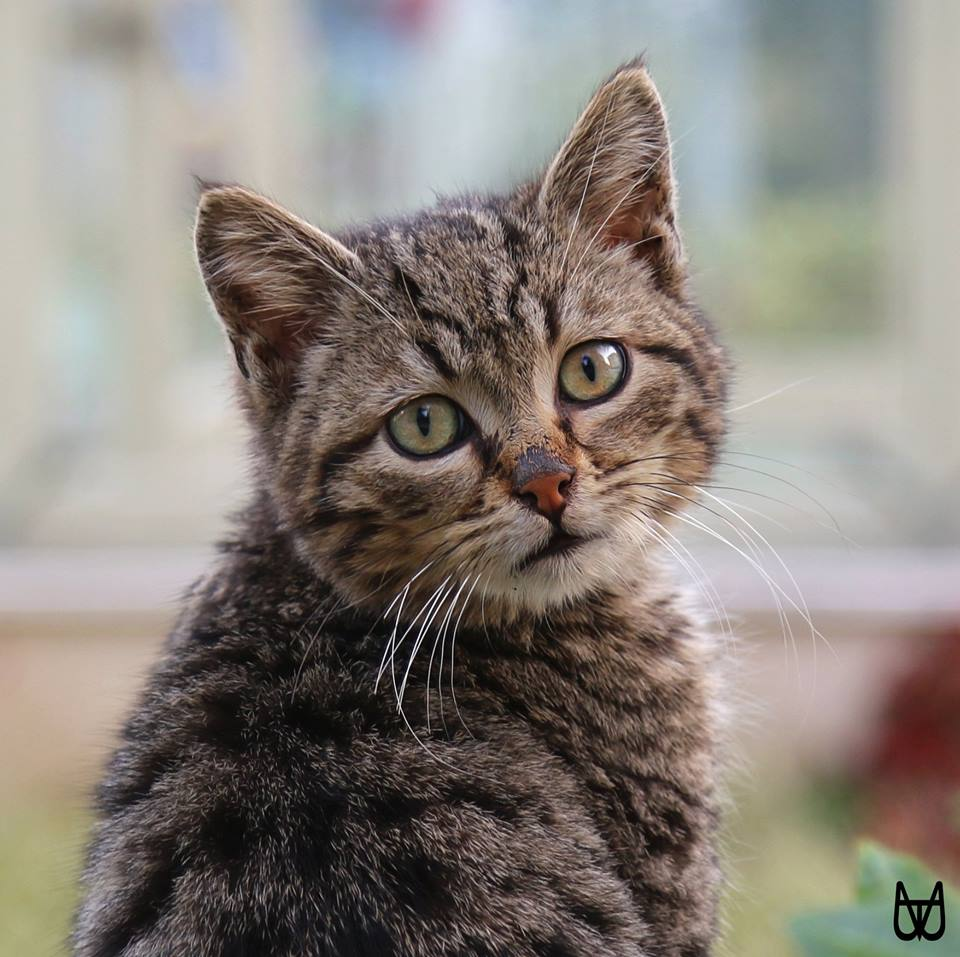 cihangir-kedileri-patiliyo-4