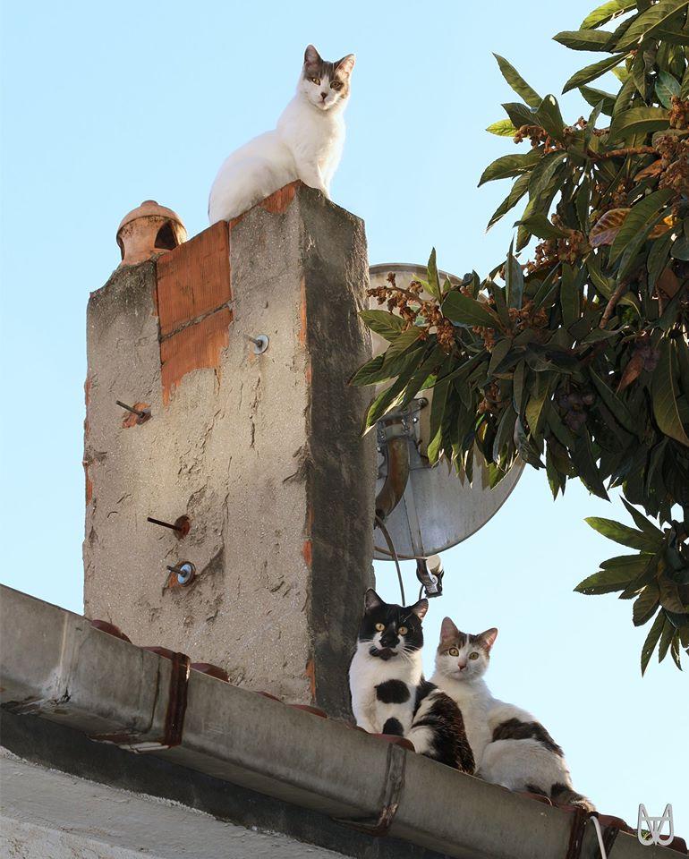 cihangir-kedileri-patiliyo-5