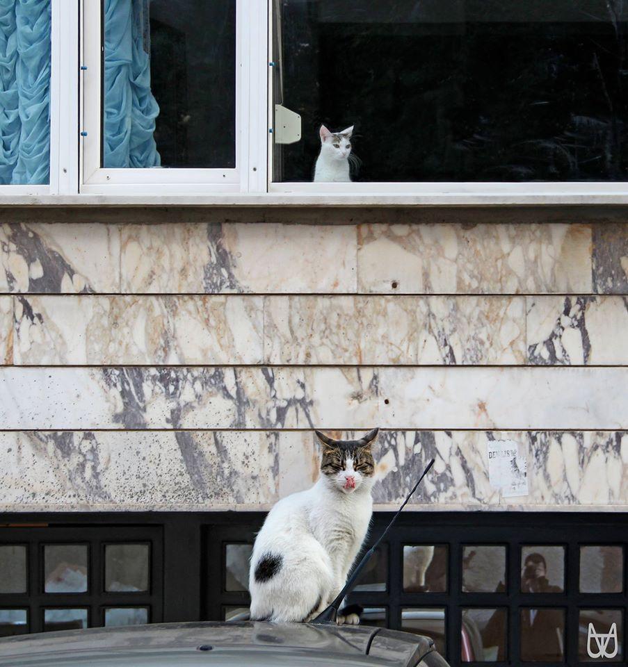 cihangir-kedileri-patiliyo-7