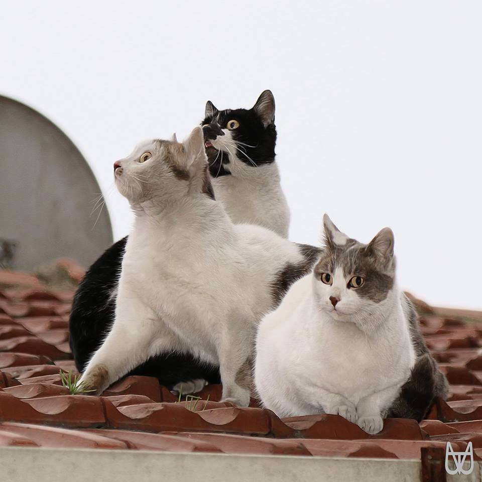 cihangir-kedileri-patiliyo-8