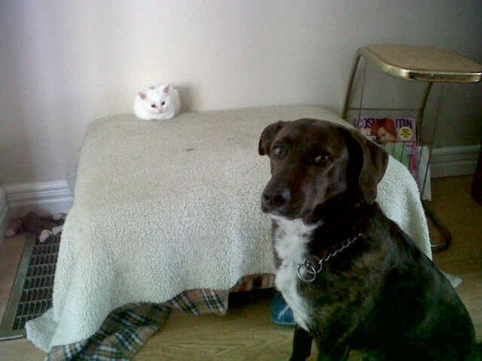 gicik-kediler-patiliyo-16