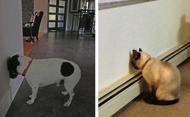 Kediniz veya Köpeğiniz Bunları Yapıyorsa Onu Acilen Veterinere Götürmelisiniz
