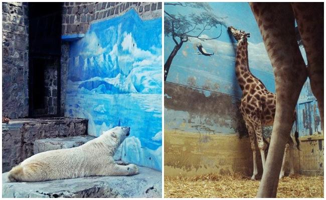 İnsanlığı Sorgulatacak 16 Fotoğrafla Hayvanat Bahçelerindeki Yalnız Hayvanlar